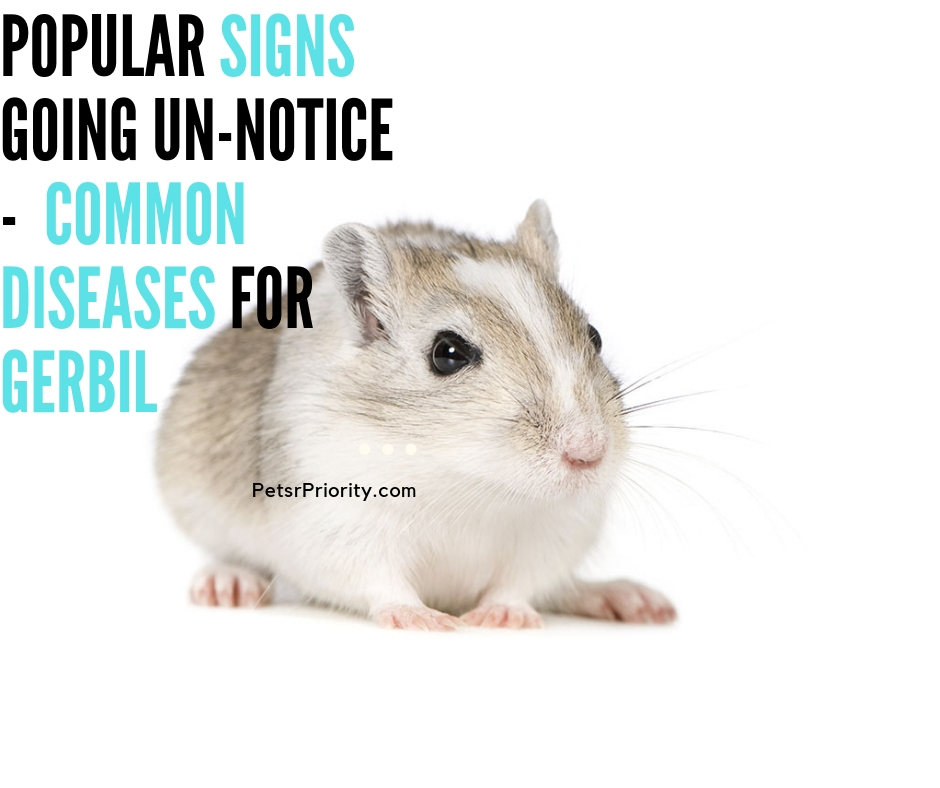 Popular Signs Going Un-notice –  Common Diseases For Gerbil