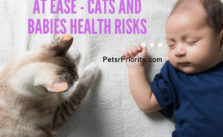 Put Your Mind and Heart at Ease – Cats and Babies Health Risks