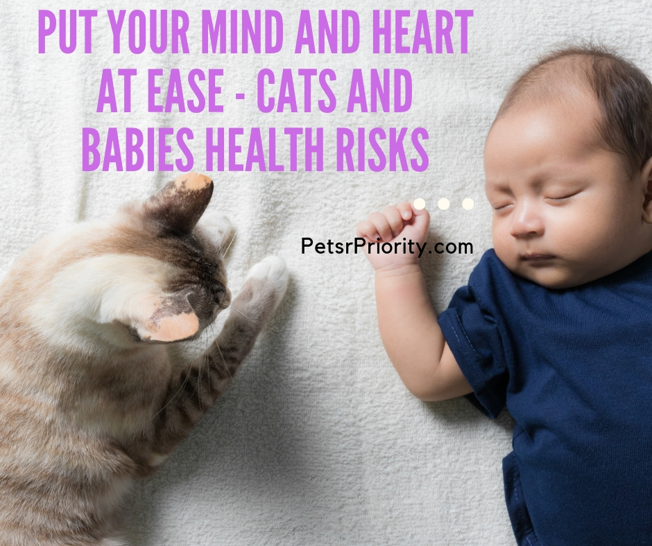 Put Your Mind and Heart at Ease - Cats and Babies Health Risks