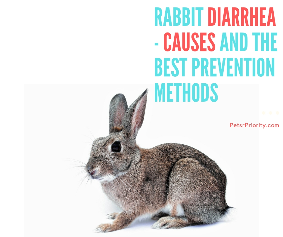 Rabbit Diarrhea - Causes and The Best Prevention Methods