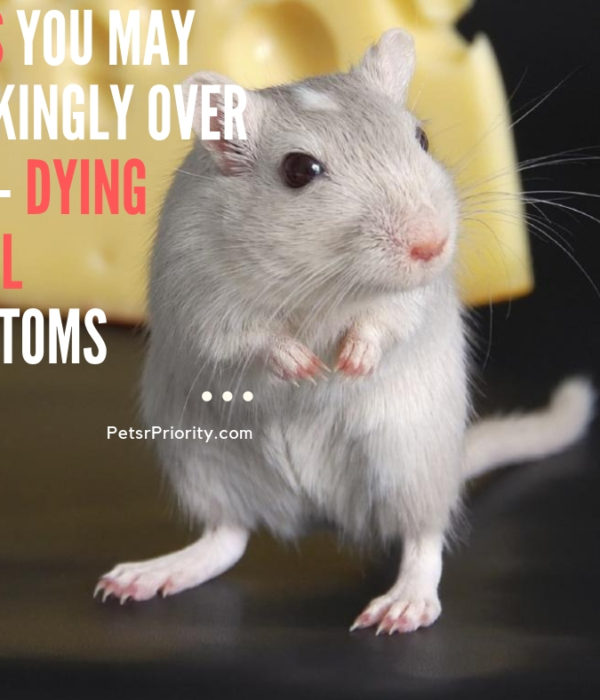 Signs You May Shockingly Over Look – Dying Gerbil Symptoms