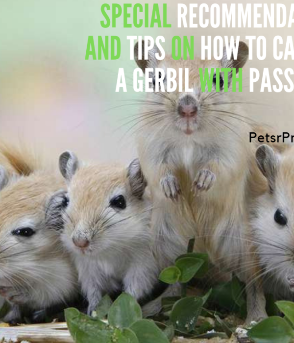 Special Recommendation and Tips on How to care for a gerbil with passion