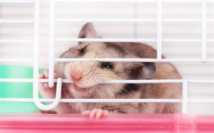 Taming hamsters