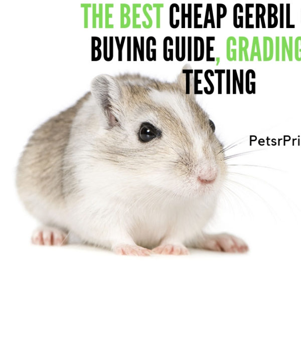 The Best Cheap Gerbil Cage - Buying Guide, Grading and Testing