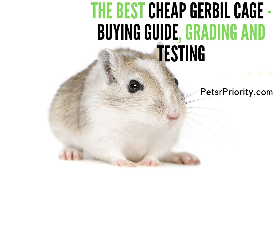 The Best Cheap Gerbil Cage – Buying Guide, Grading and Testing