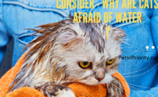 Things To Seriously Consider - Why are cats afraid of water