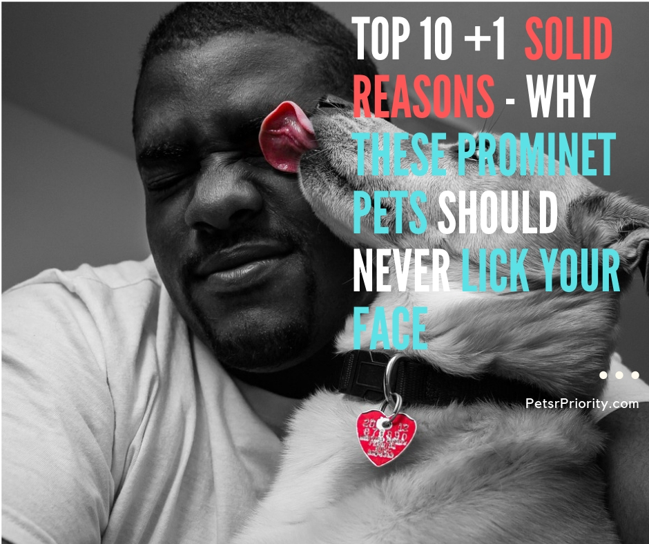 Top 10 +1 Solid Reason - Why These Prominent Pets Should Never lick Your Face