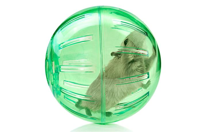 Toys for hamsters - To Tame Your Hamster
