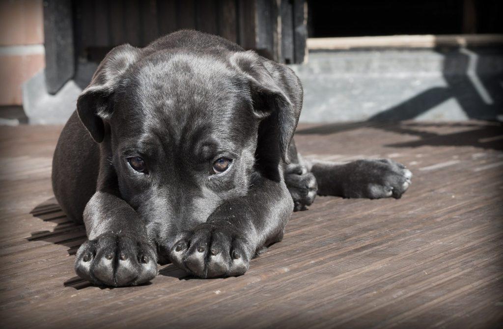Treatment methods For  Urolithiasis in Dogs