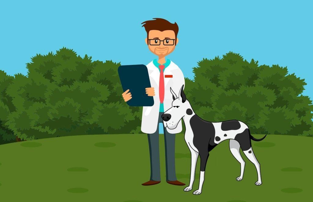 Treatment of urolithiasis dog at vet