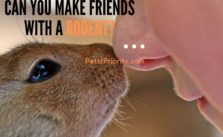 Tricky Tricky Question -Can you make friends with a rodent