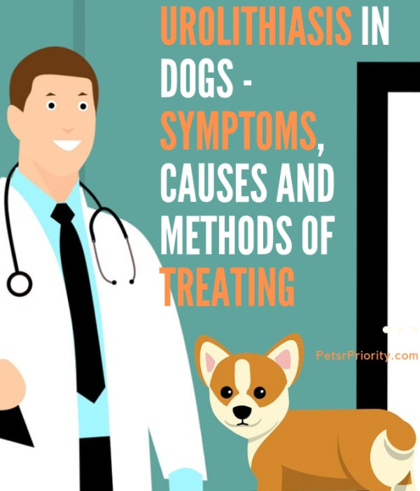 Urolithiasis In Dogs - Symptoms, Causes and Methods of Treating