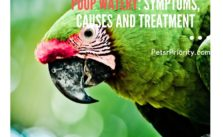 Will My Bird Die – Parrot Poop Watery Symptoms, causes and treatment