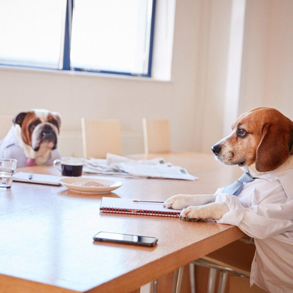 dogs in business clothes