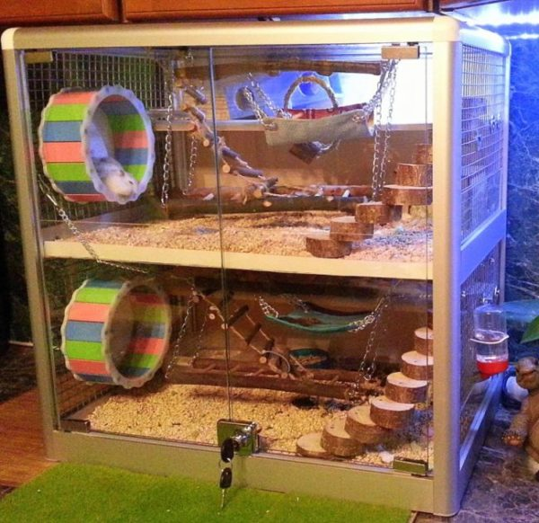 hamster display case