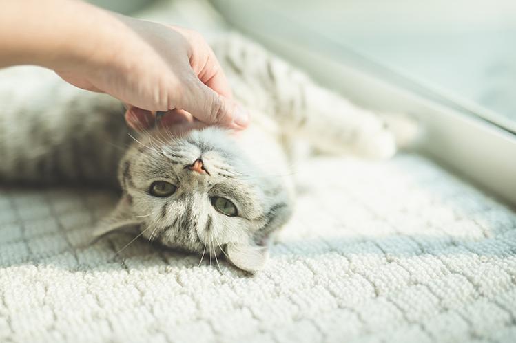 petting-a-cat