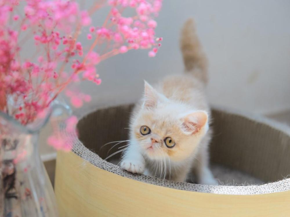 photo-of-Exotic-cat-race