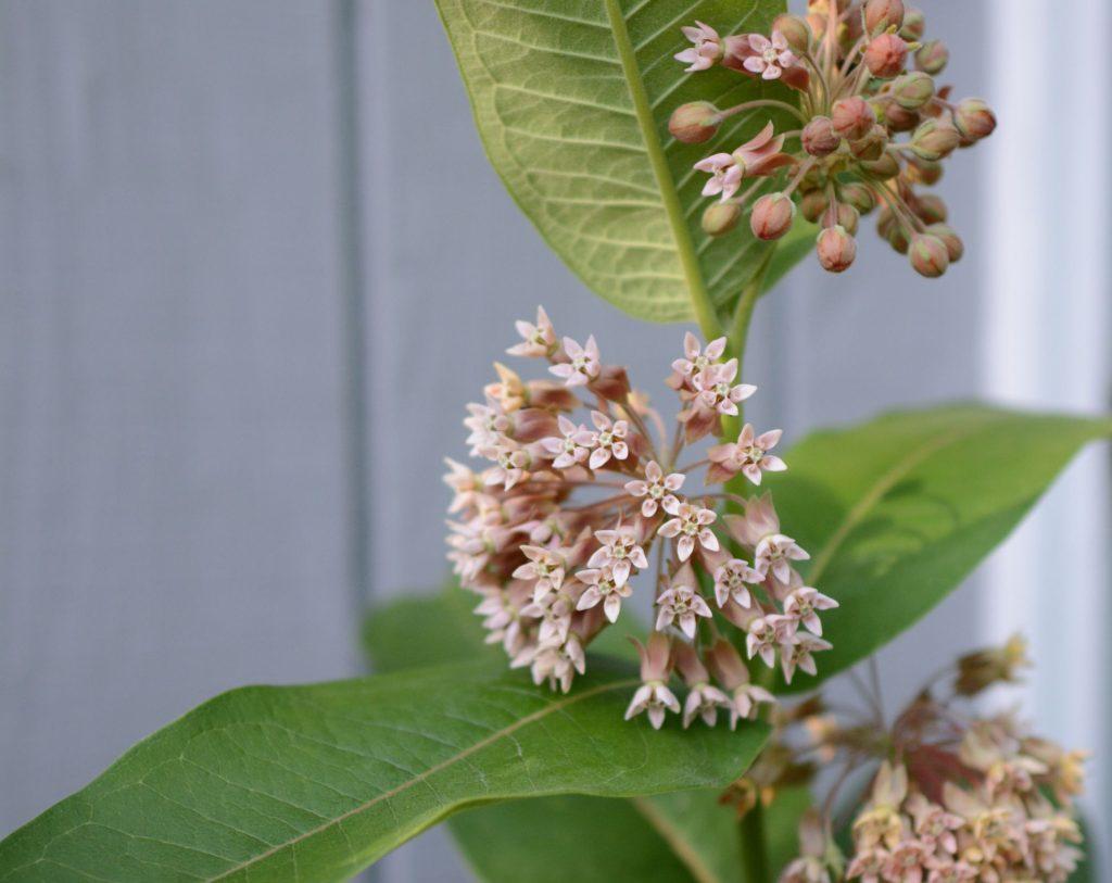 poisonous plants for your gerbil