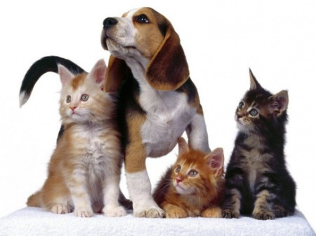 puppy and cats together