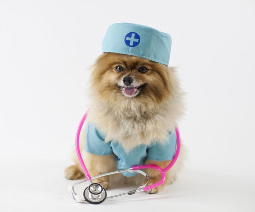 puppy in medicine doctor clothes
