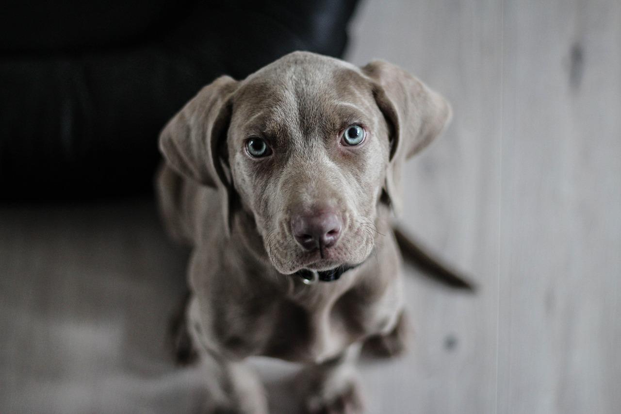 urolithiasis-in-dogs