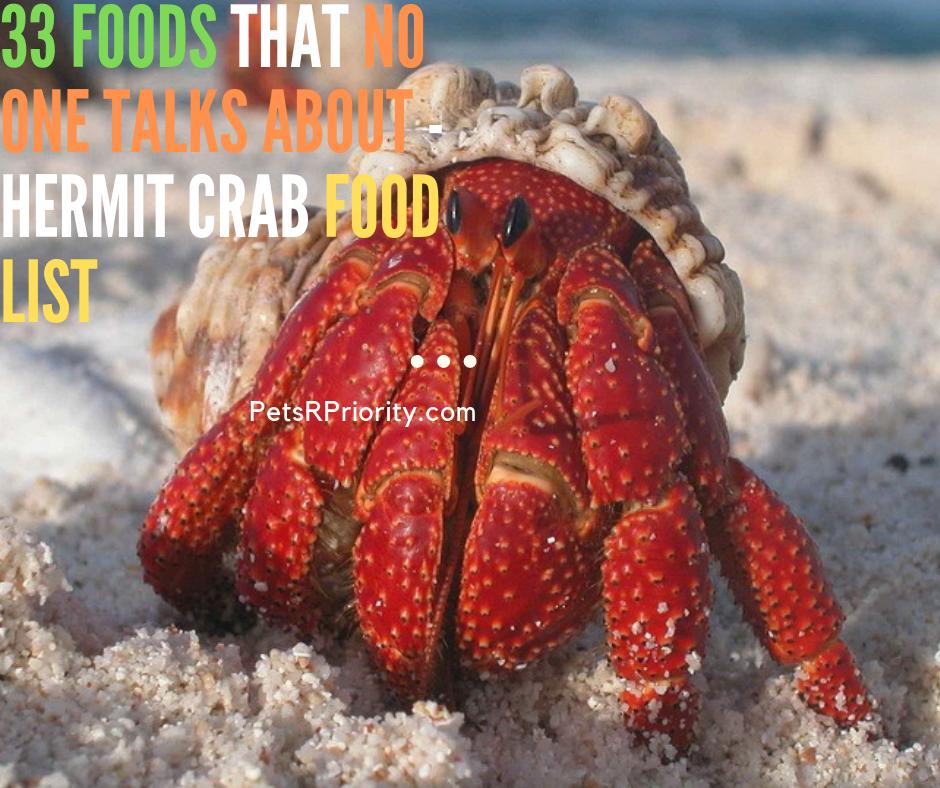 33 Foods That No One Talks About - Hermit Crab Food List