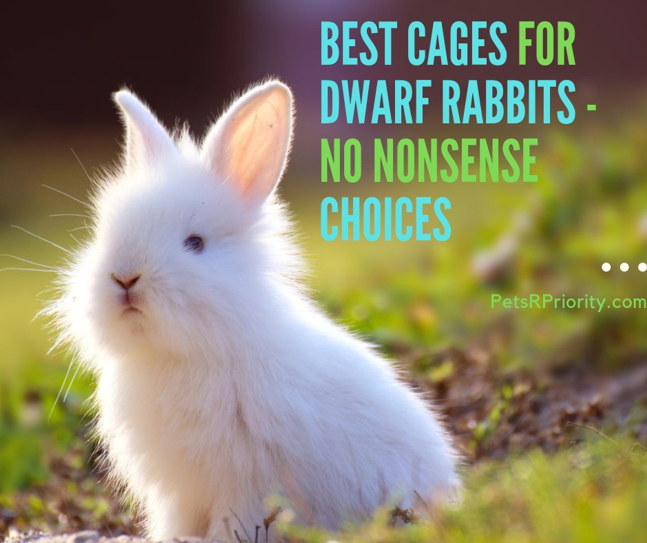 Best Cages for Dwarf Rabbits - No Nonsense Choices