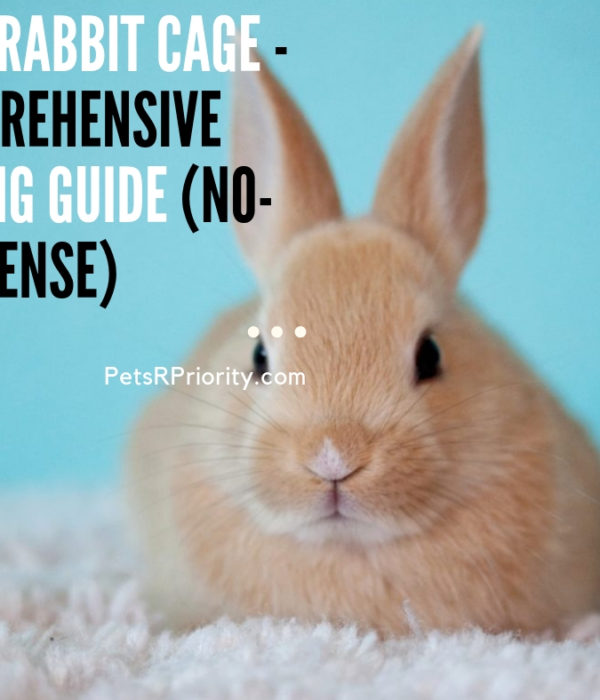 Best Rabbit Cage – Comprehensive Buying Guide (No-Nonsense)