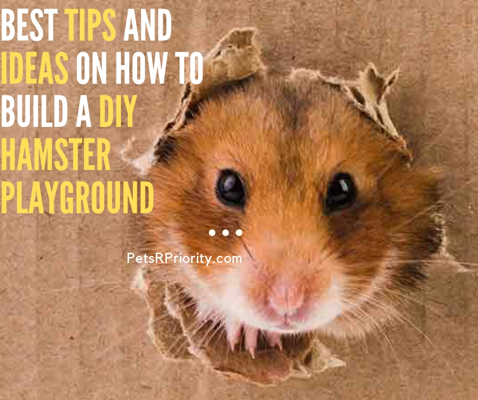 Best Tips and Ideas On How to Build a DIY Hamster Playground