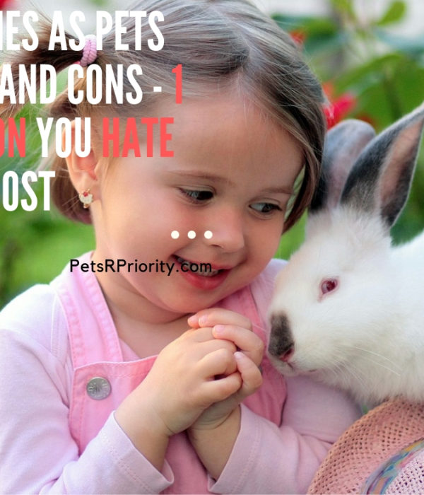 Bunnies as Pets Pros and Cons - 1 Reason You Hate The Most