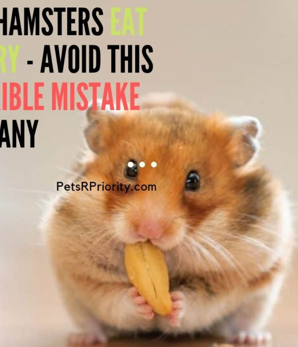 Can Hamster Eat Celery Avoid This Horrible Mistake By Many