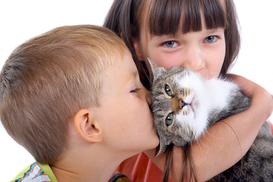 Cat as Pets for Your kids