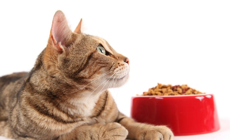 Cat food must supply the animal's body