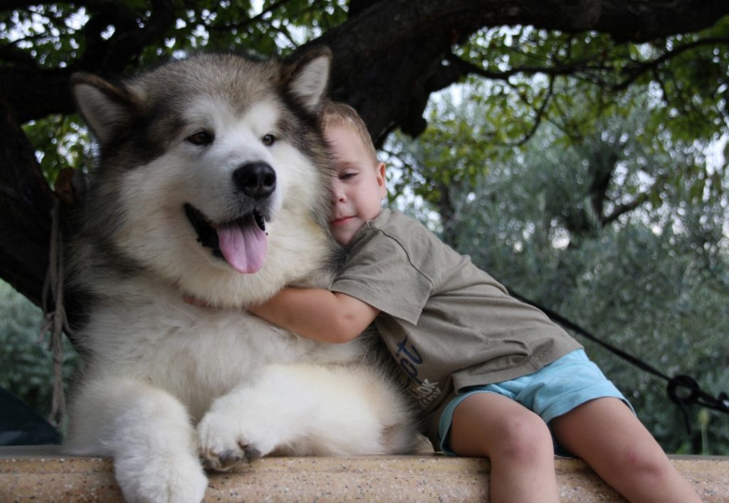 Dog as a Pet for your kids