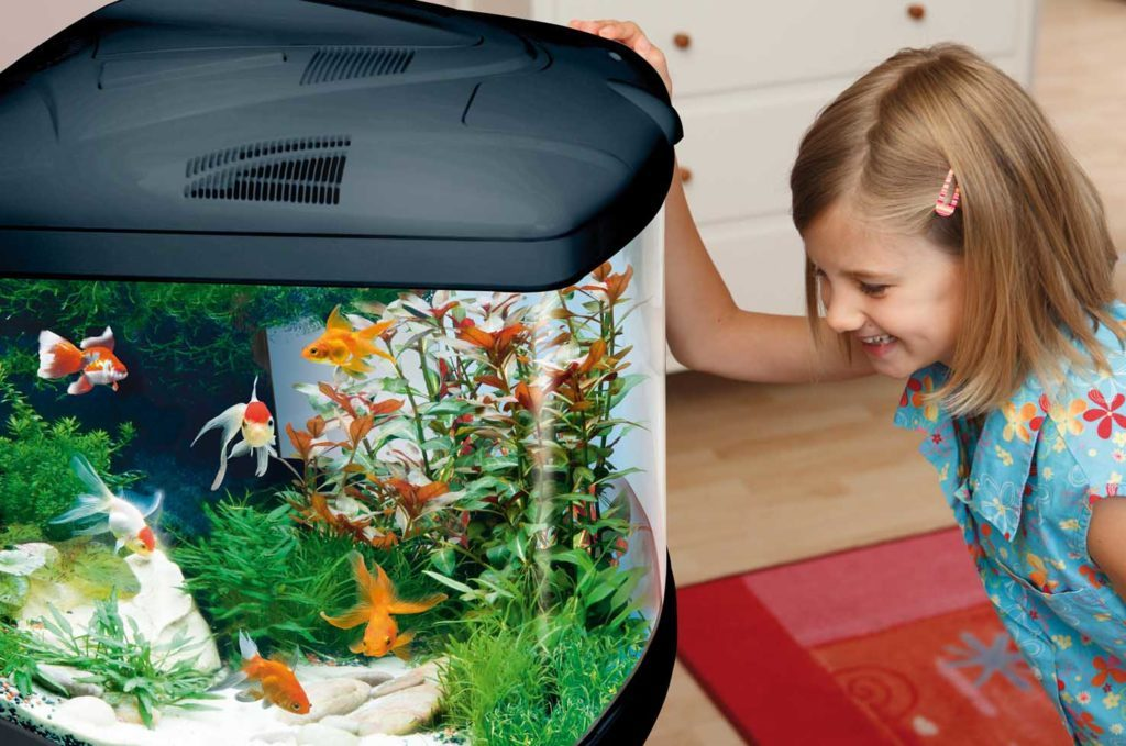 Fishes - As Pets for Kids