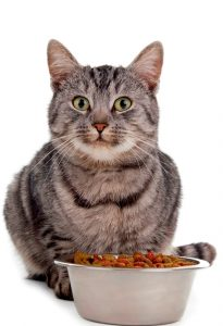 For sterilized cats, food must be carefully selected