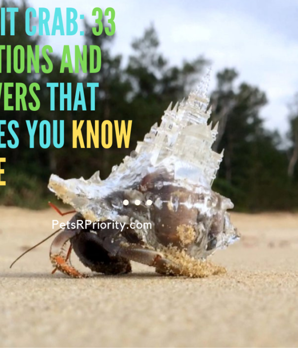 Hermit Crab: 33 Questions and Answers That Proves You know Little