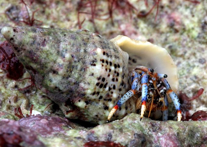 Hermit Crab Food List