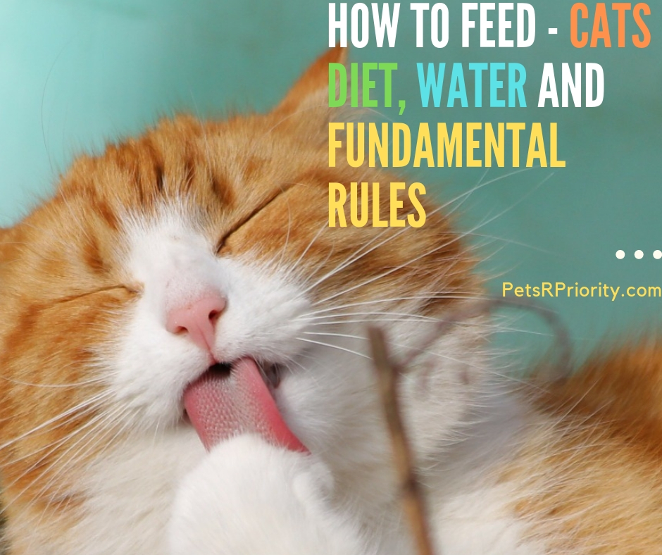 How To Feed Cats Diet, Water and Fundamental Rules