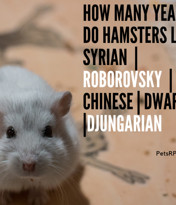 How many years do hamsters live – Syrian | Roborovsky | Chinese |Dwarf |Djungarian