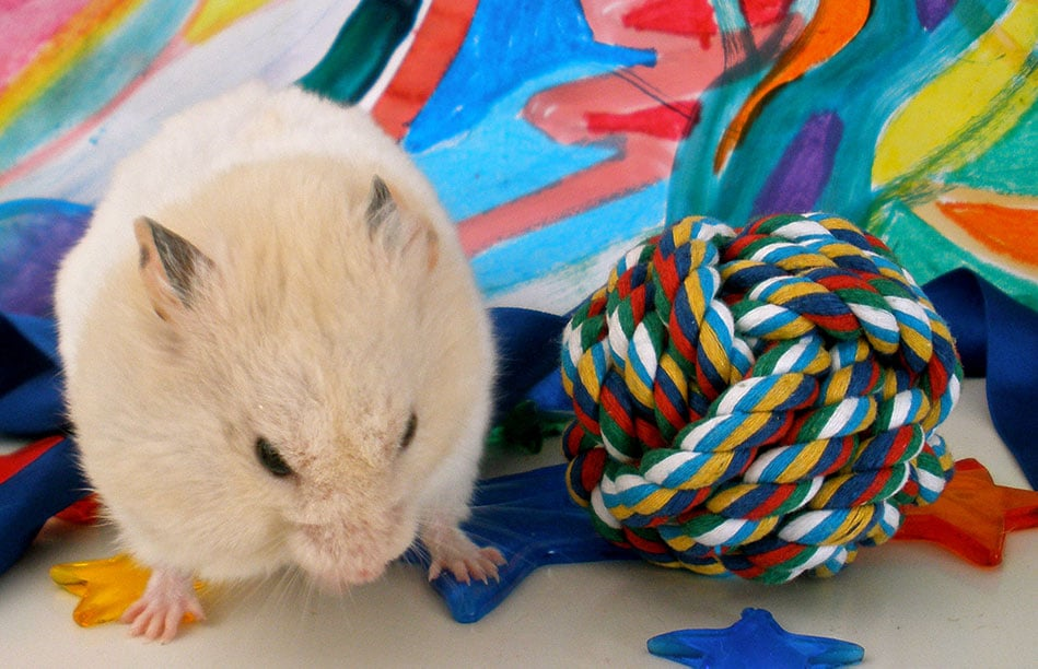 How to build a DIY hamster playground