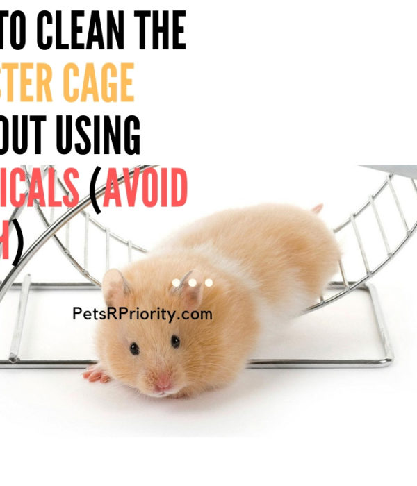 Tips and Ideas – How to clean the hamster cage without using chemicals