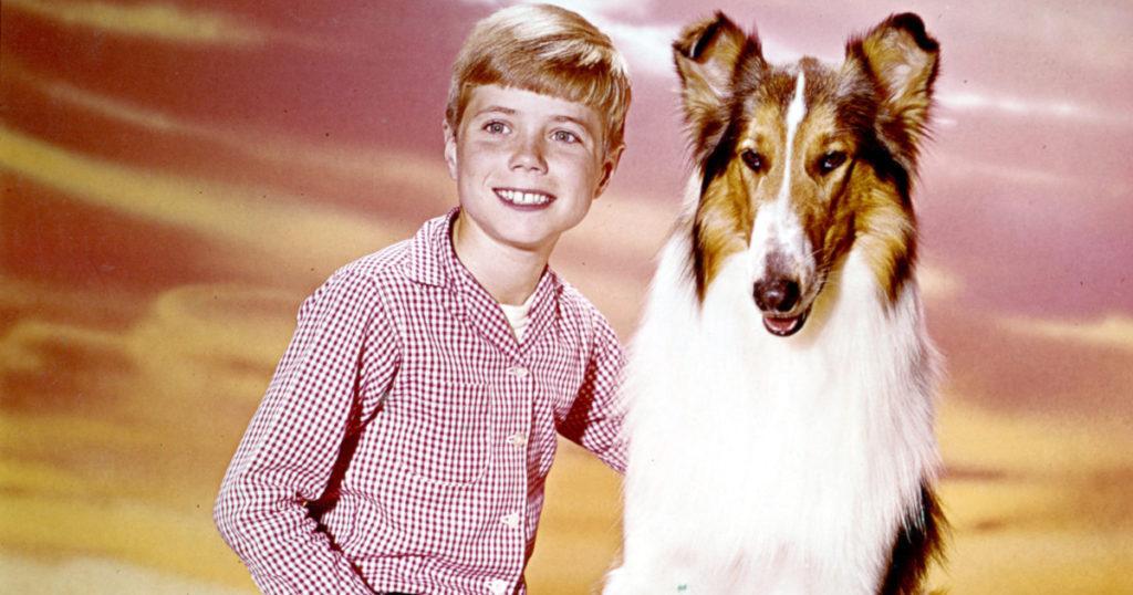 Lassie (lassie)