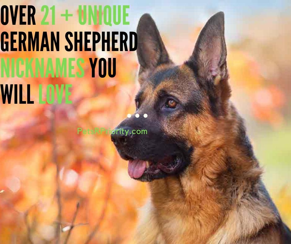 Over 21 + Unique German Shepherd Nickname You Will Love