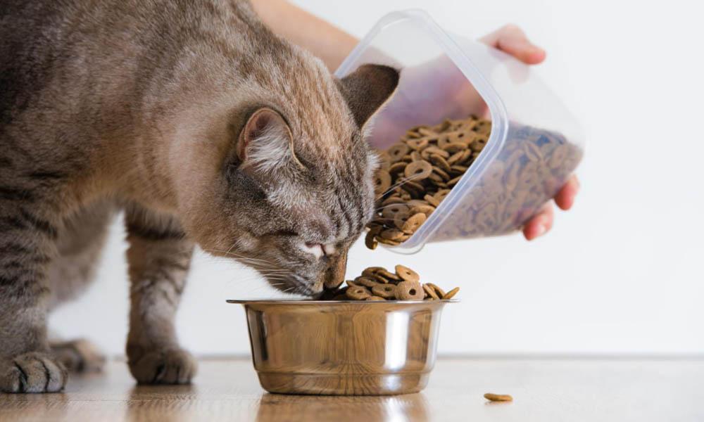 Ready feed - Cats