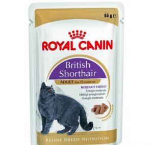 Royal Canin British short hair