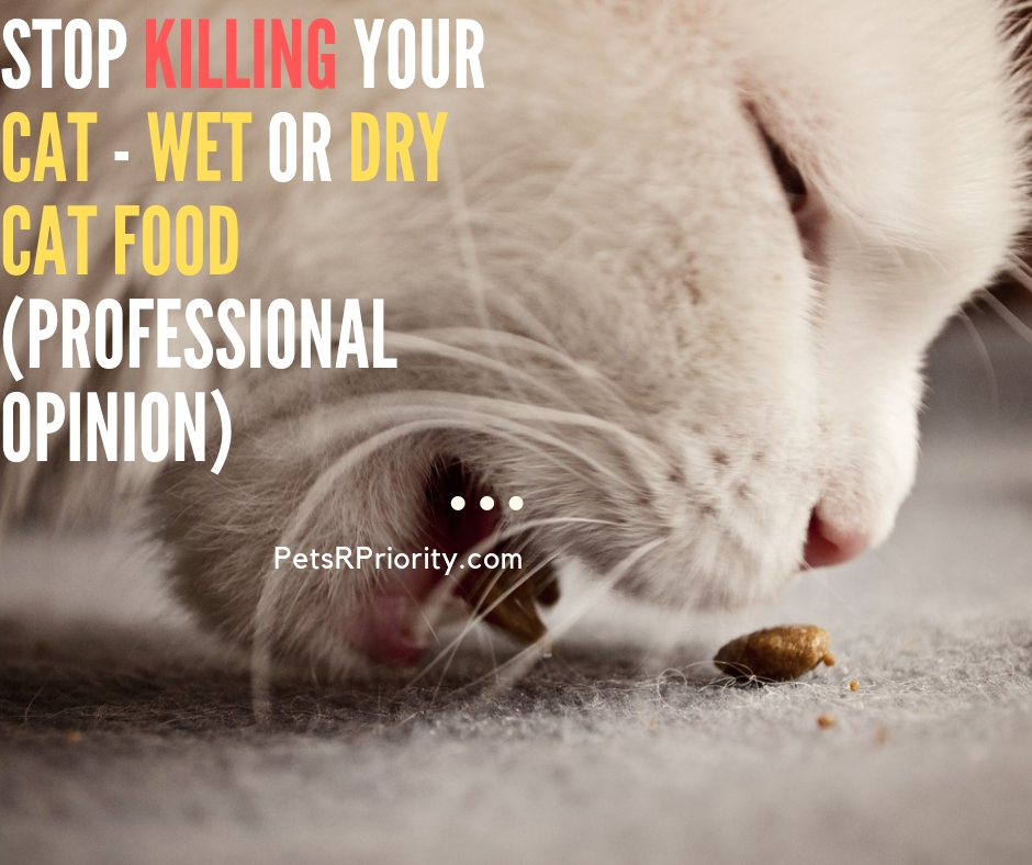 Stop Killing Your Cat - Wet Or Dry Cat Food (Professional Opinion)