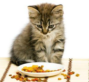 The kitten especially needs a balanced diet