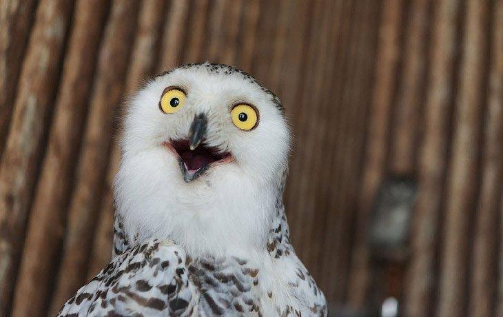 The myth of intelligence Owls