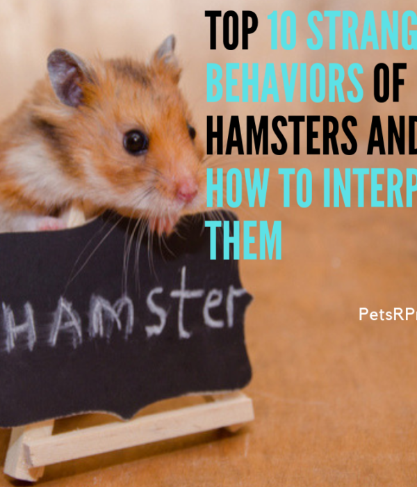 Top 10 Strange Behaviors of Hamsters and How to Interpret Them
